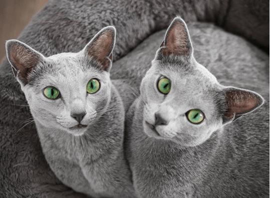 Xafi & Auri