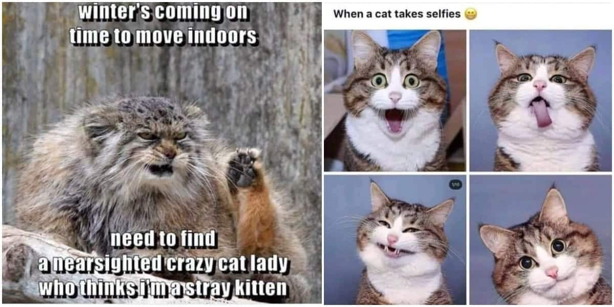 Collection Of Purrfectly Hilarious Cat Memes - Cattitude Daily