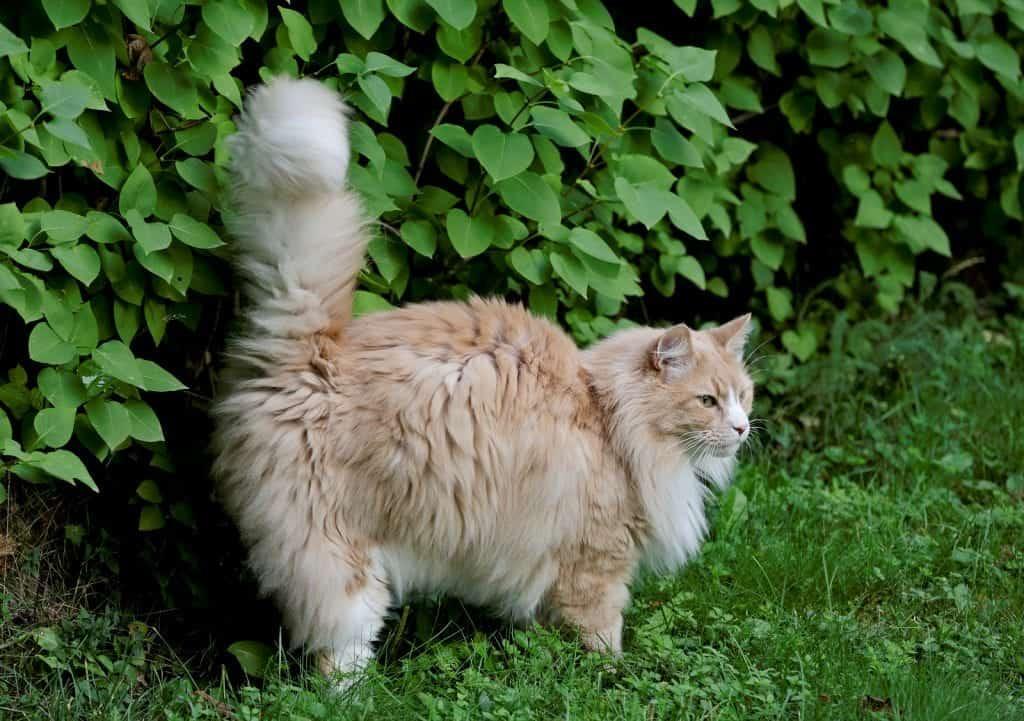 cat spraying