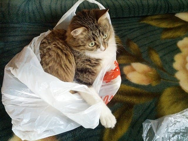 why cats lick plastic