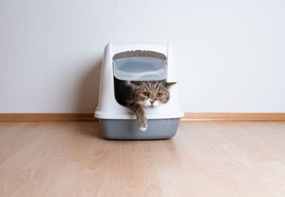 litter box location