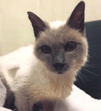 world's oldest living cat
