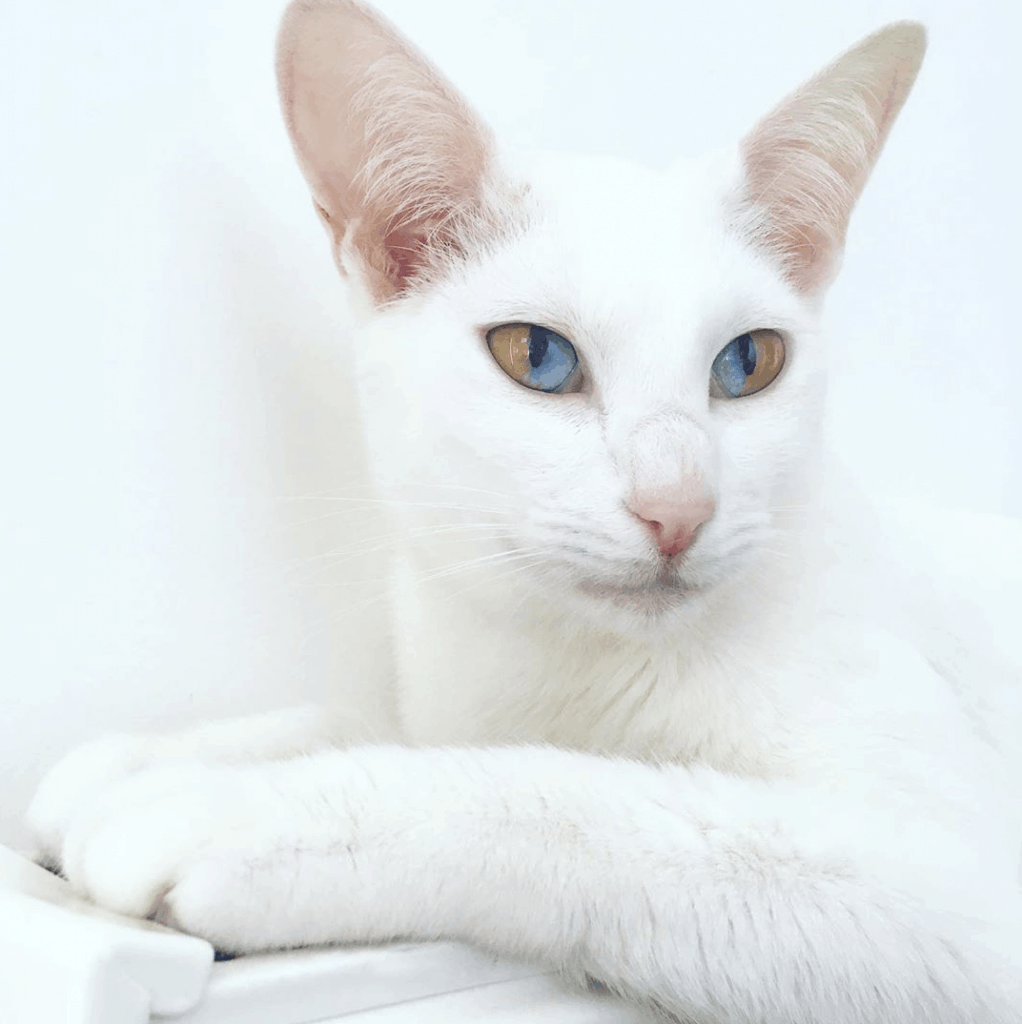 Odd Eyed Olive