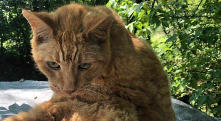 world's oldest living cats