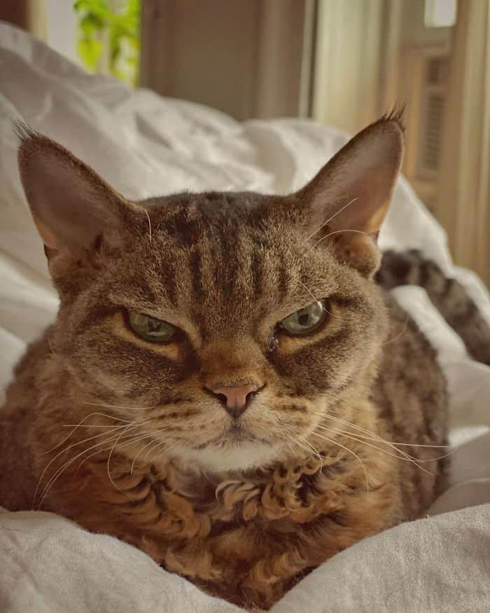 grumpy barbara