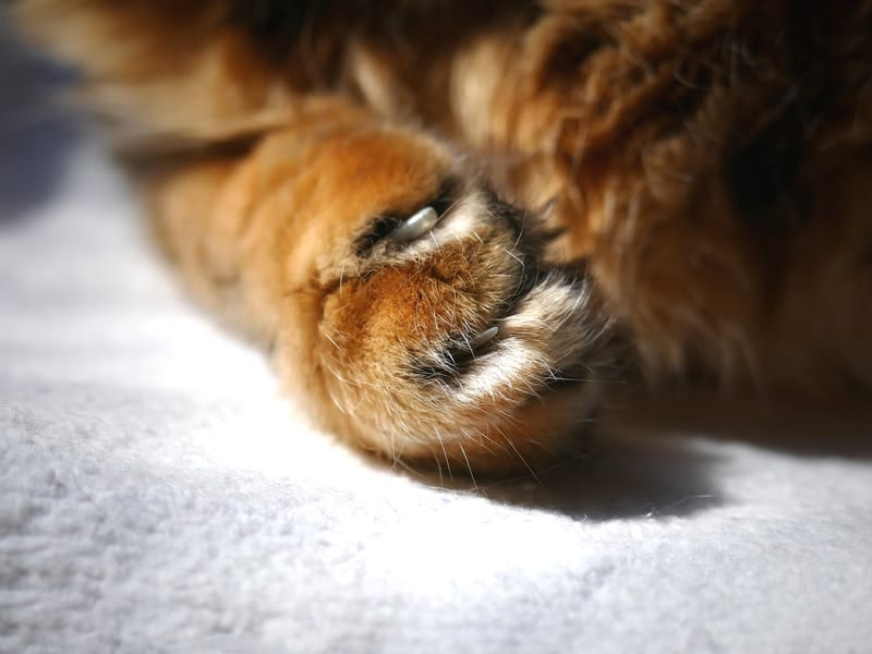 declawing your cat