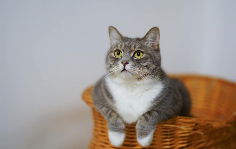 dangers of mesh laundry baskets for cats