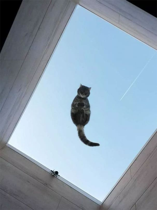 cats and glass