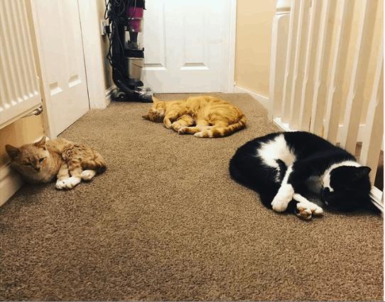 munchie the perma kitten