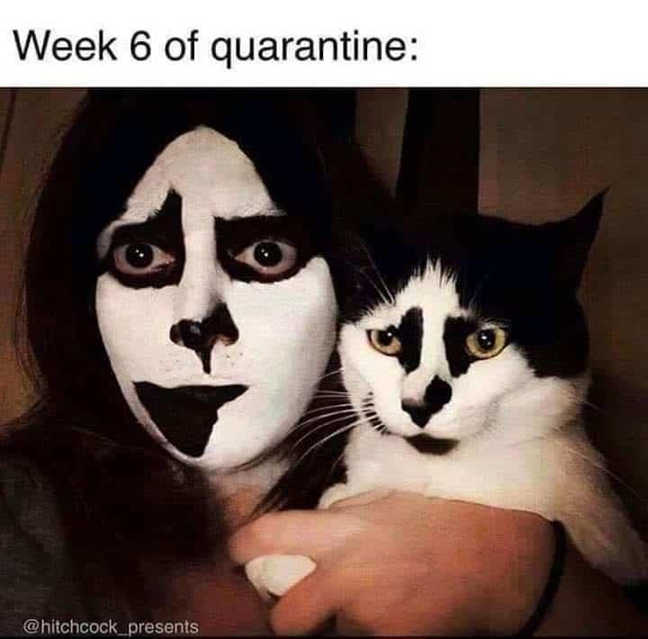 quarantine cat memes
