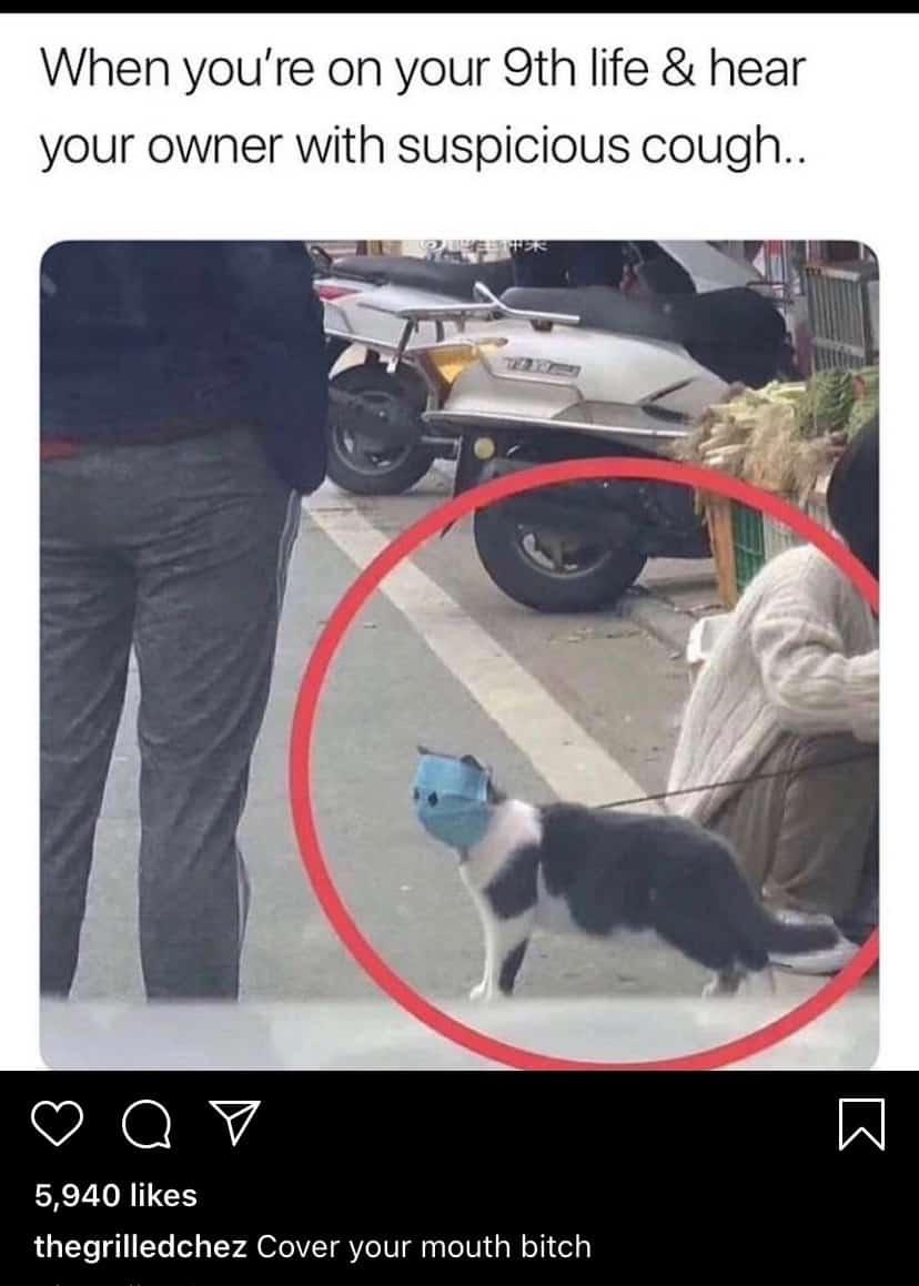 The Best Quarantine Cat Memes To Hopefully Make You Smile ...