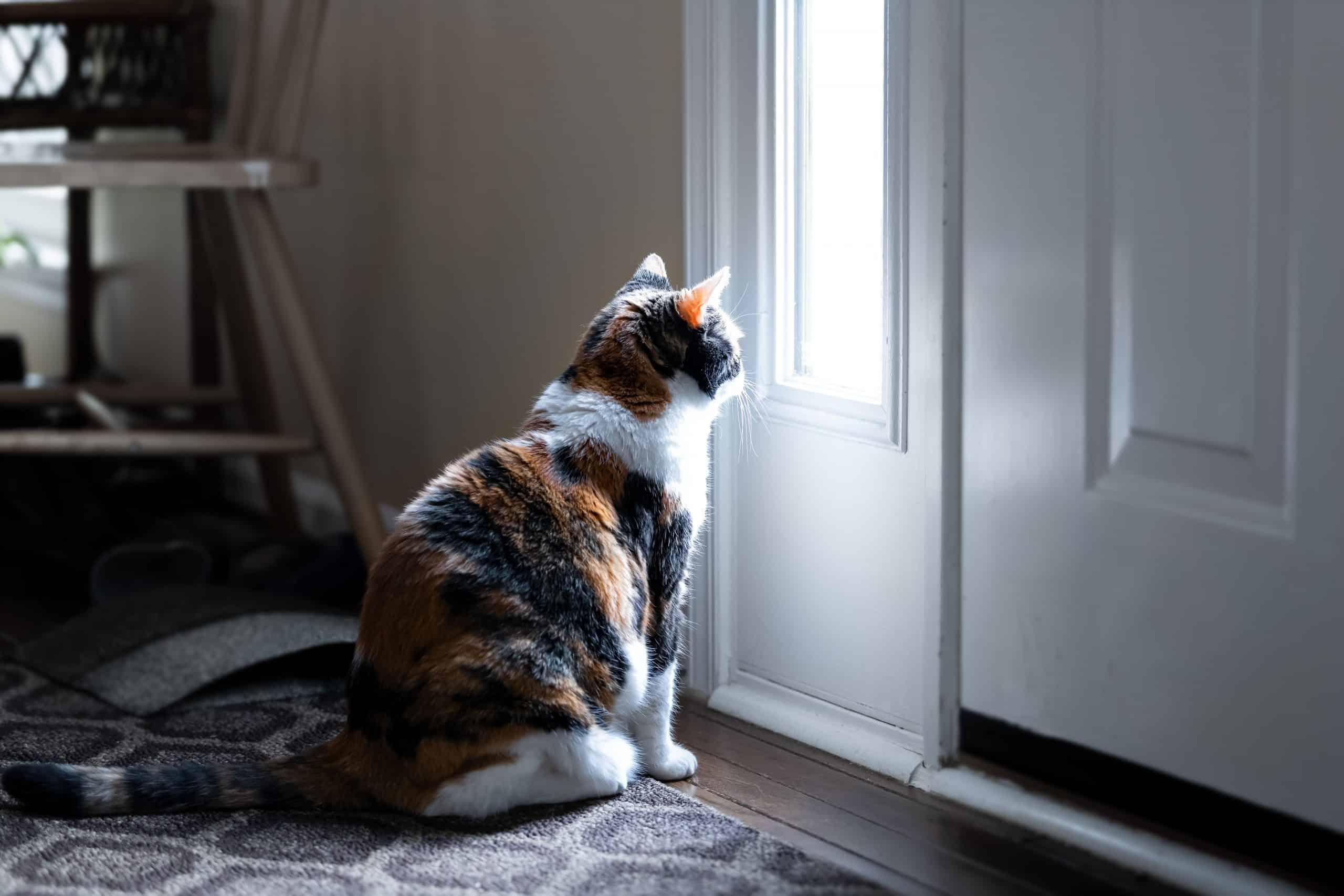 cats hate closed doors