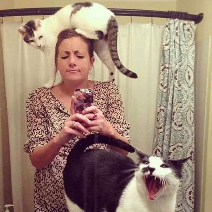 funny selfies with cats