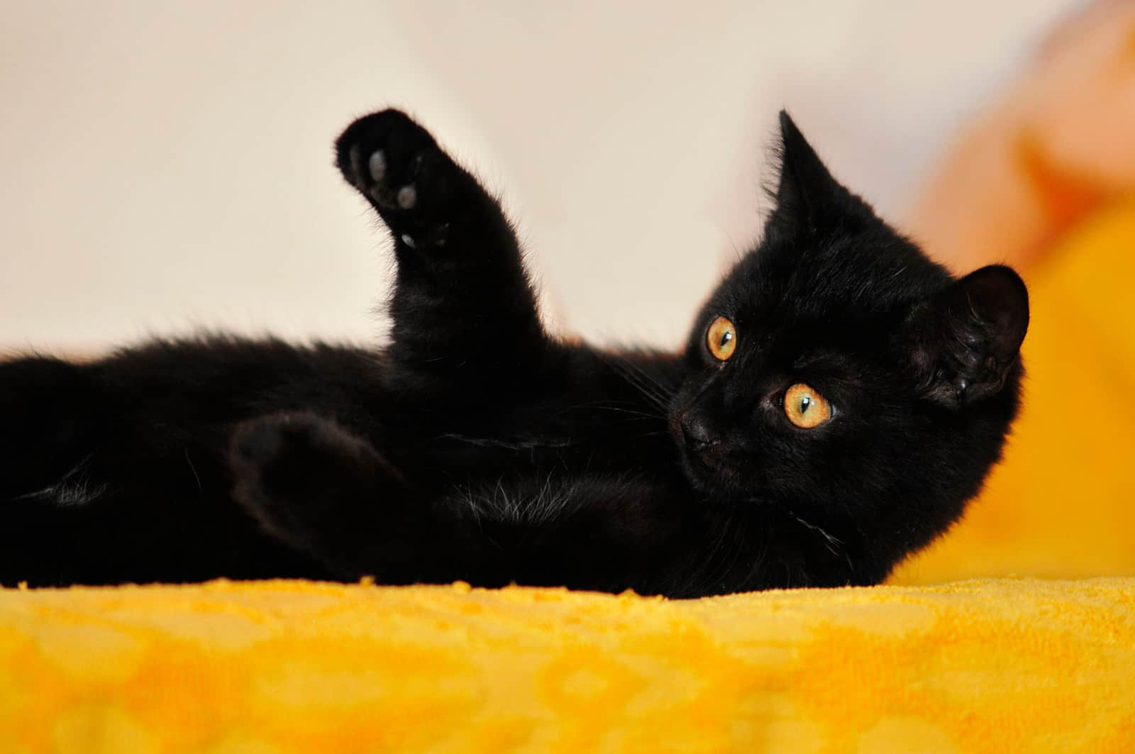 why do people think black cats are bad luck?