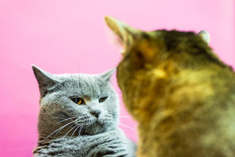 cat jealousy