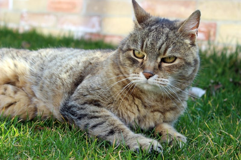 tips for senior cats