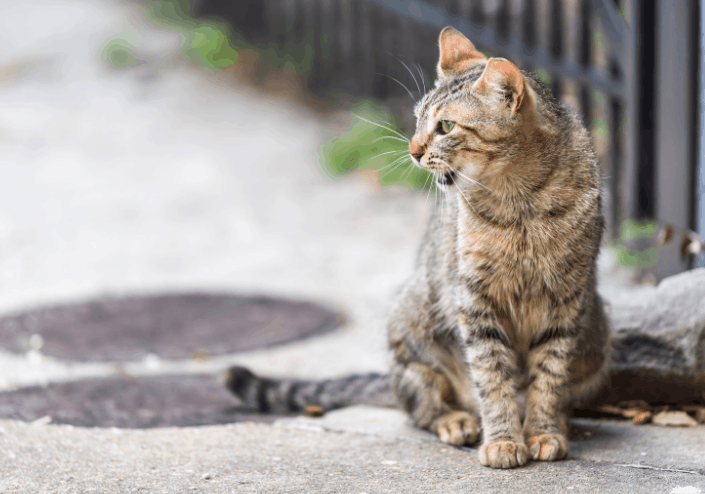 why do cats chatter?