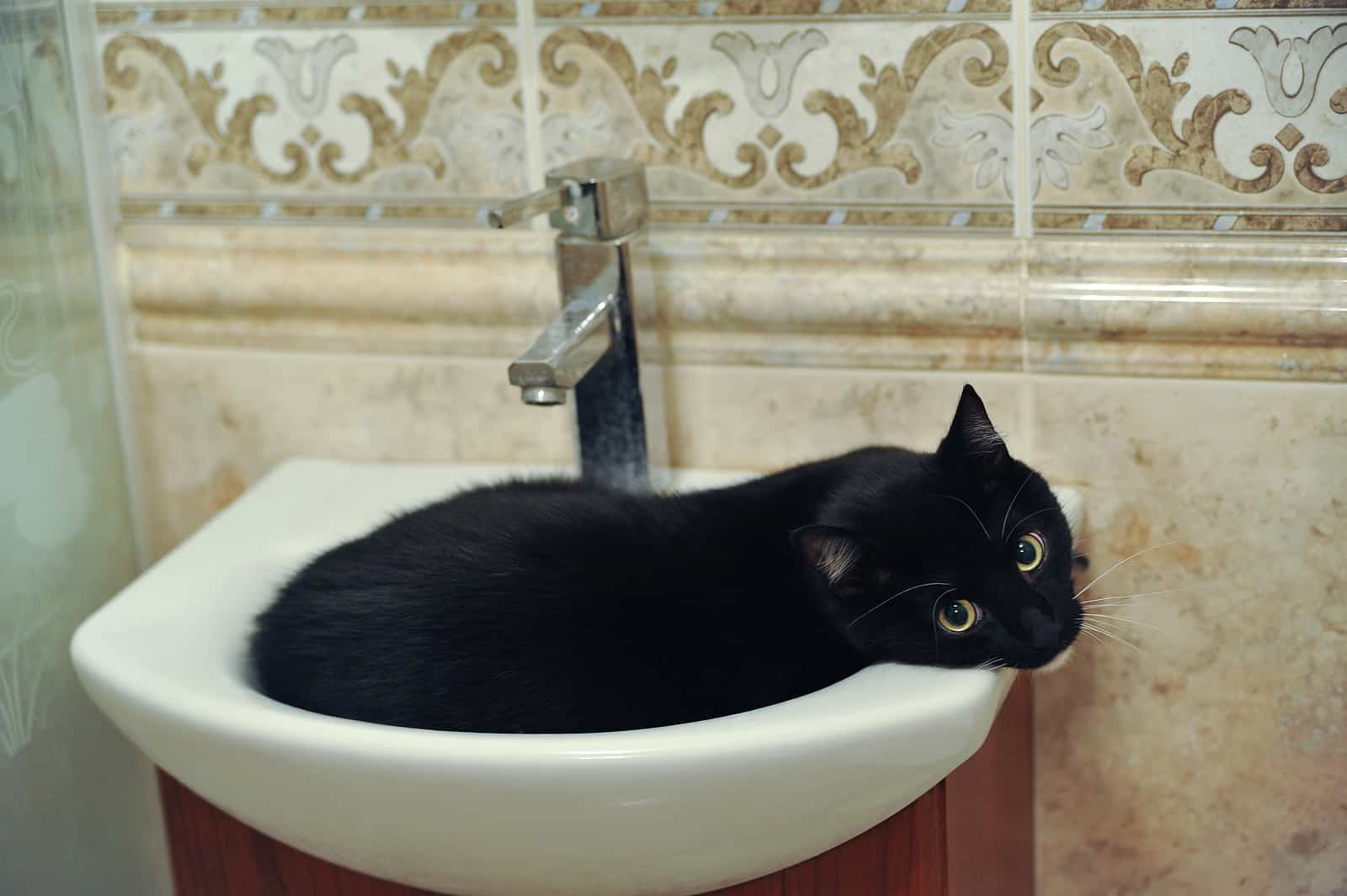 why do cats like to sleep in sinks