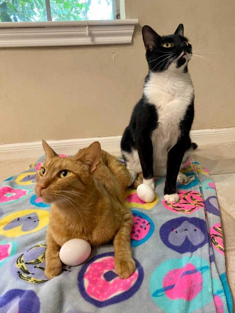 cats and eggs