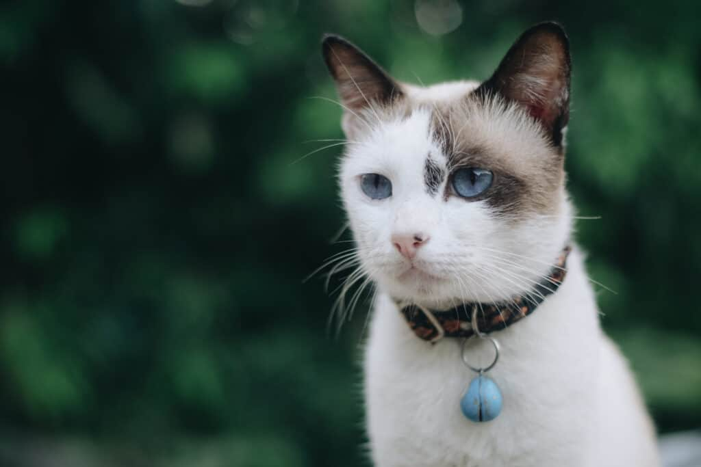 bell on your cat's collar