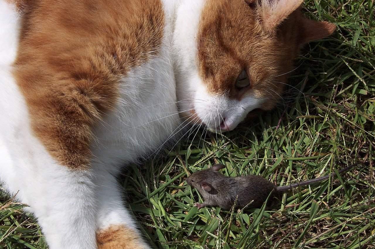 cat brings dead animals