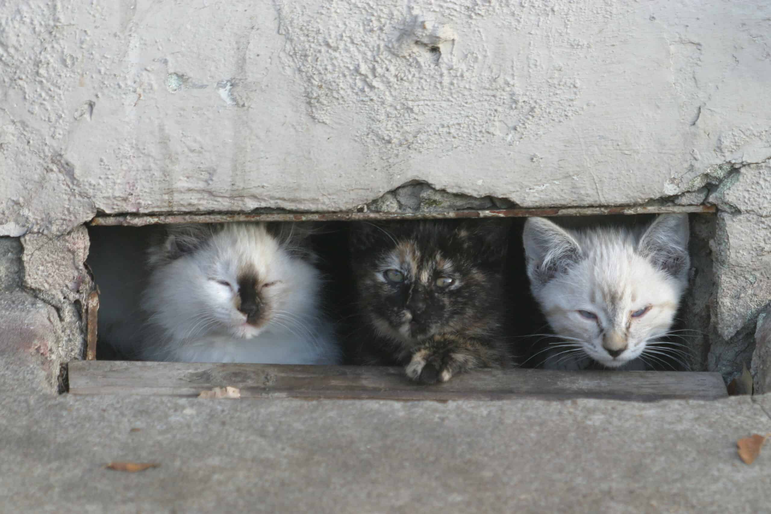 tips for caring for feral cats