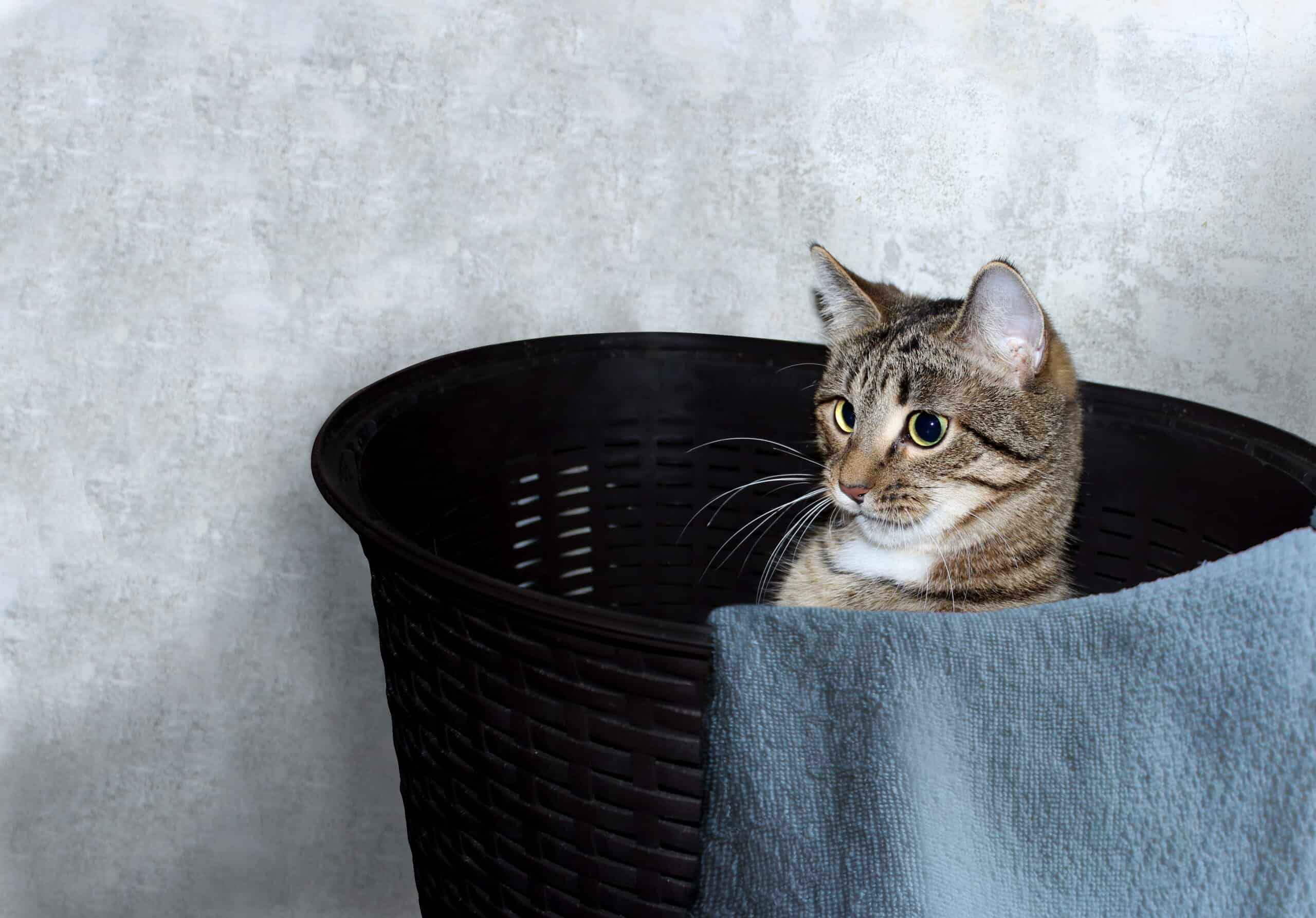 why do cats love laundry baskets