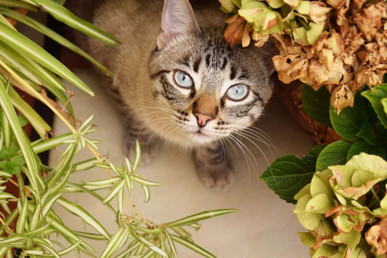 cats eat houseplants