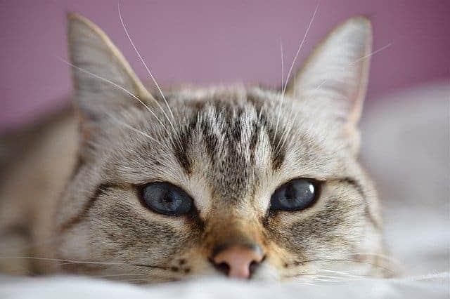 cat ignore
