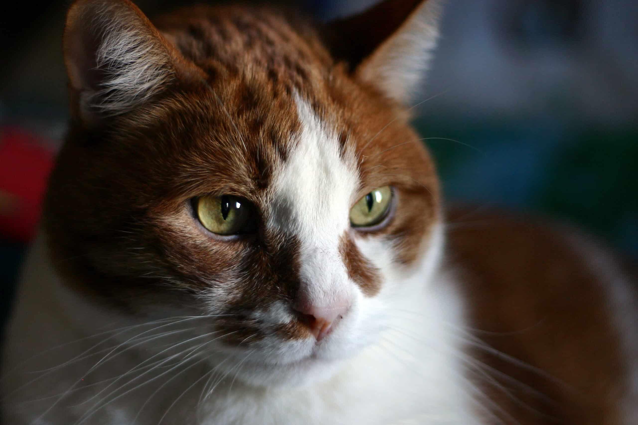 illnesses that cats often hide