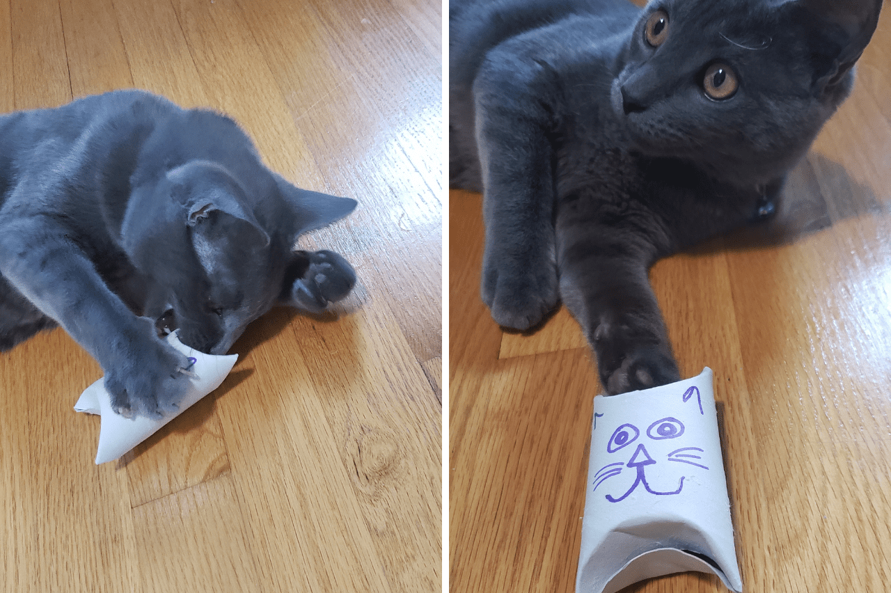 homemade cat toy