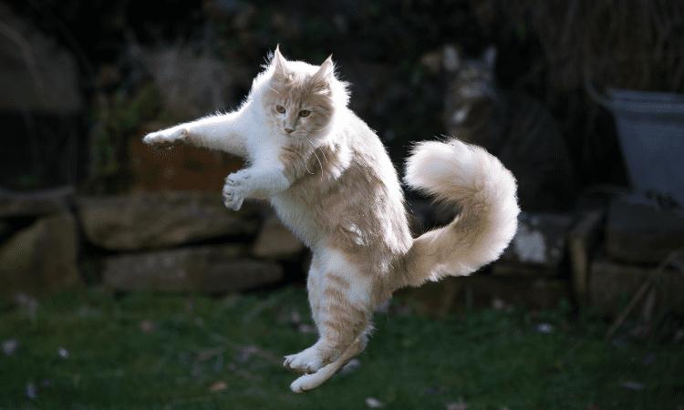 why do cats jump sideways
