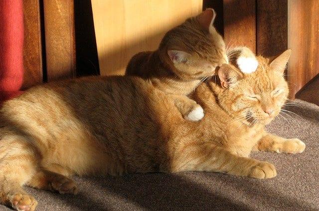 introduce new kitten