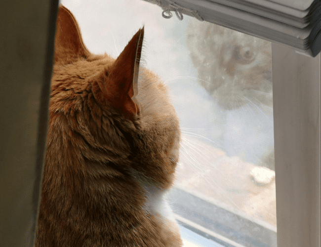 do cats miss their owners when they're away?