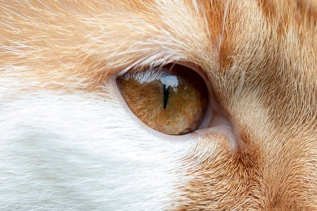 cats see in color