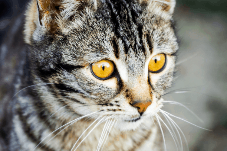 why do cats pee on things?