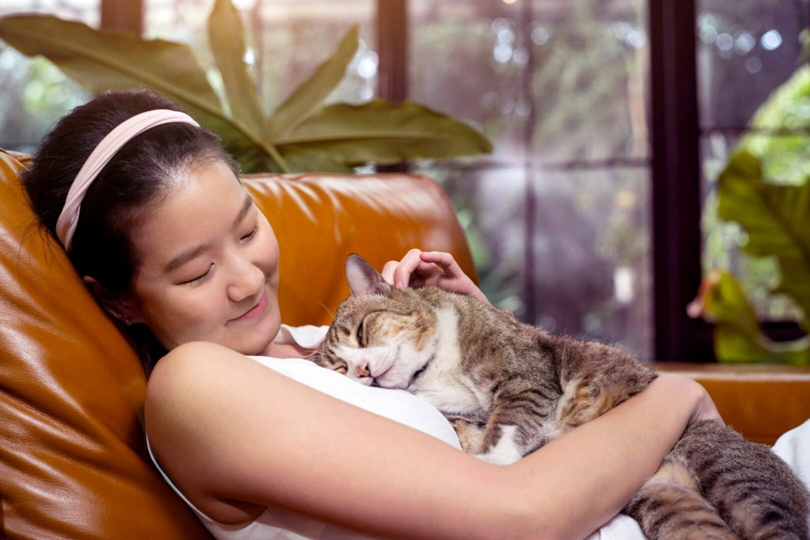 what emotions can cats experience?