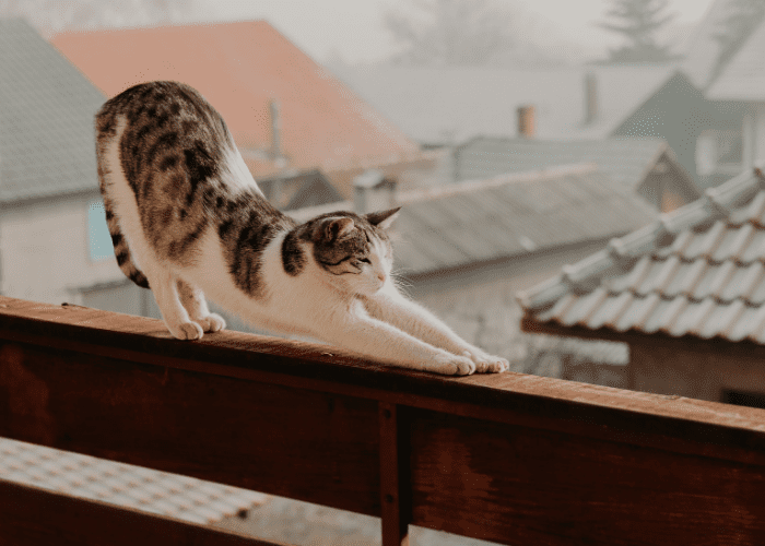 cats are flexible