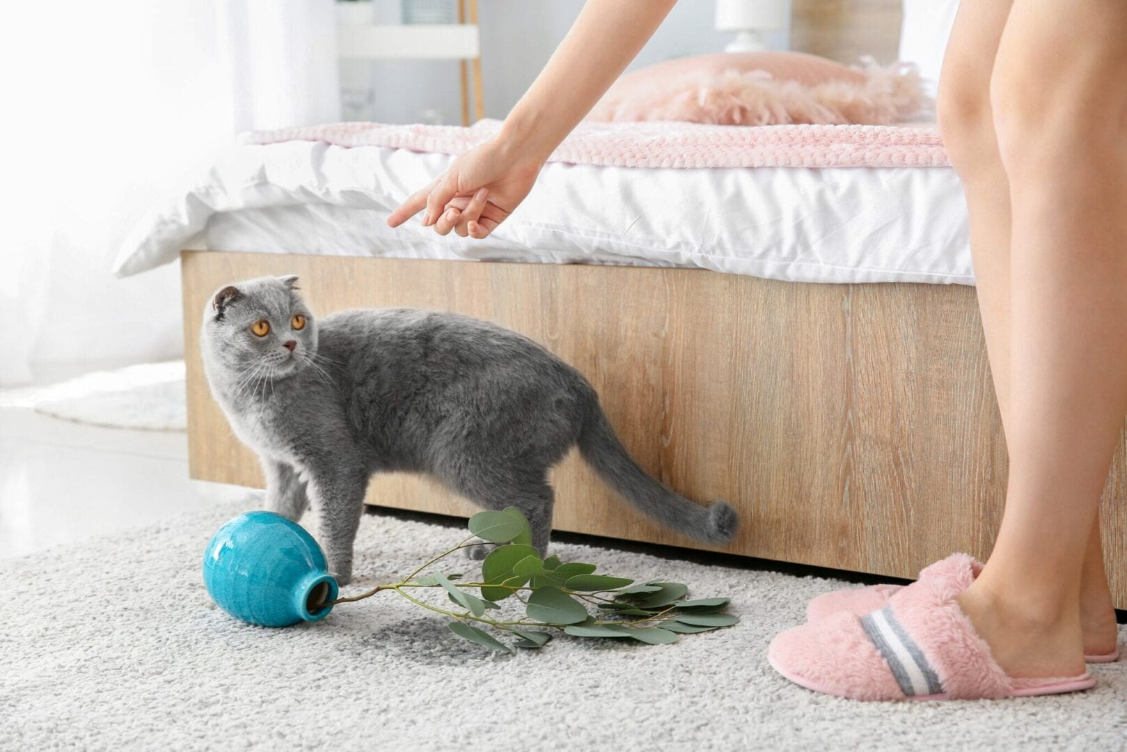 why you shouldn't punish your cat