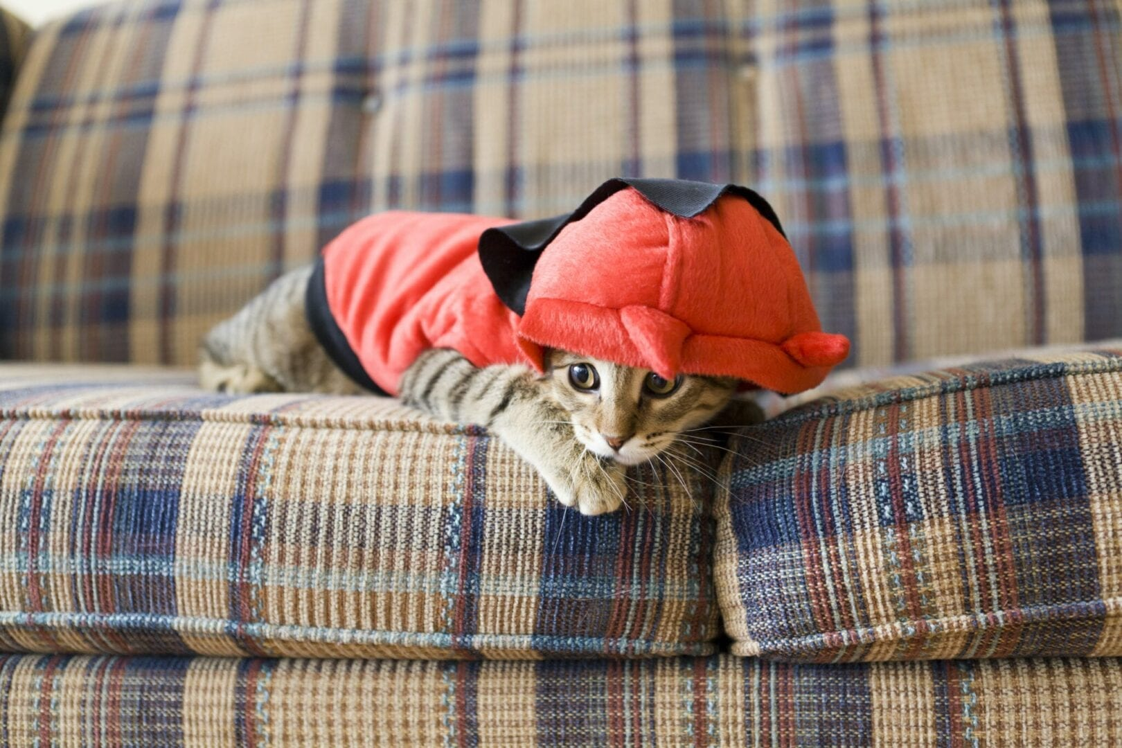 why do cats go limp in clothes?