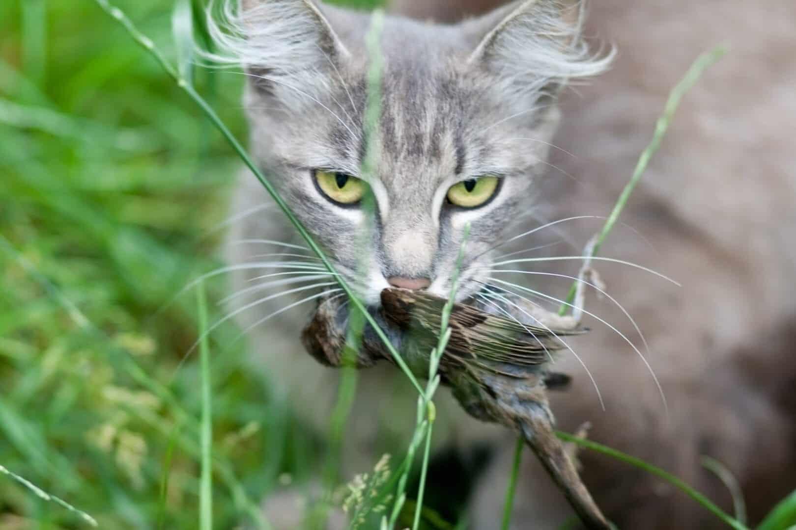 eat their prey